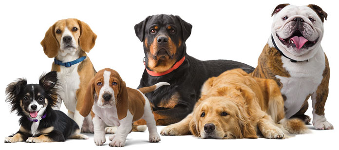 Dog Breed Books For Sale