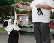 Adestramento Border Collie (1)