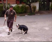 Adestramento Border Collie (12)
