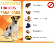 alimentos-proibidos-animal-de-estimacao (4)