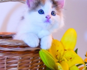 little kitten in a basket and flowers