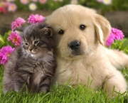 Cats and-Kittens and Dogs and Puppies