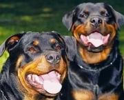 Cachorro-Raivoso