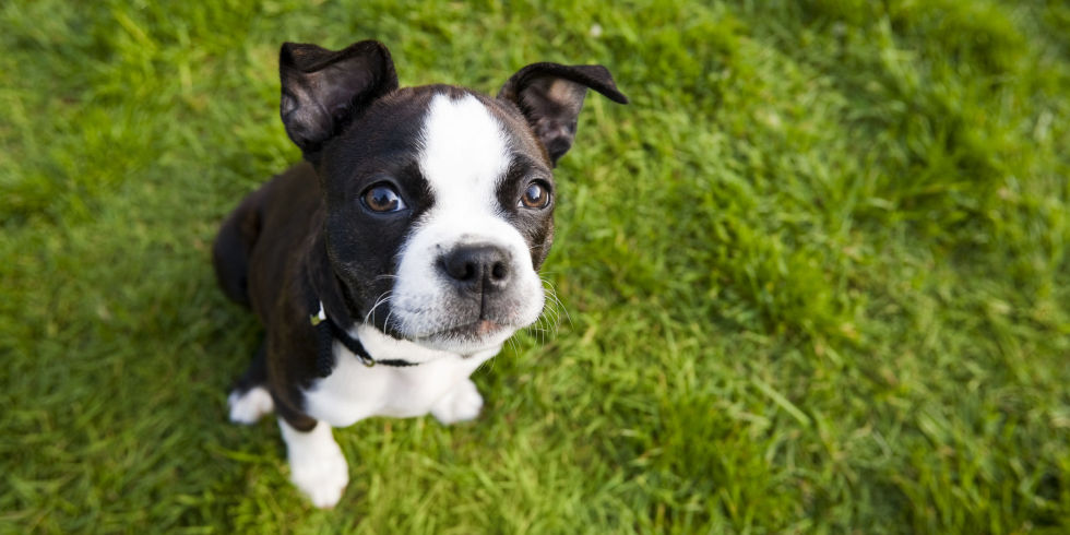 Dog Breeds Lbs And Under