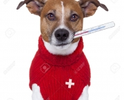 17408900-sick-ill-cold-dog-with-fever-Stock-Photo-pet