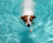 51-dog-swimming-pool-DT-425km071411