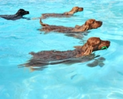 deco-dogs-swimming
