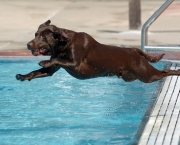LON HORWEDEL/The Ann Arbor News