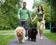 couple-walk-dogs