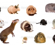 Set of different species rodents