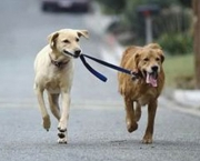 exercising-dogs4-12