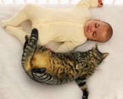 getty_rm_photo_of_baby_sleeping_with_cat