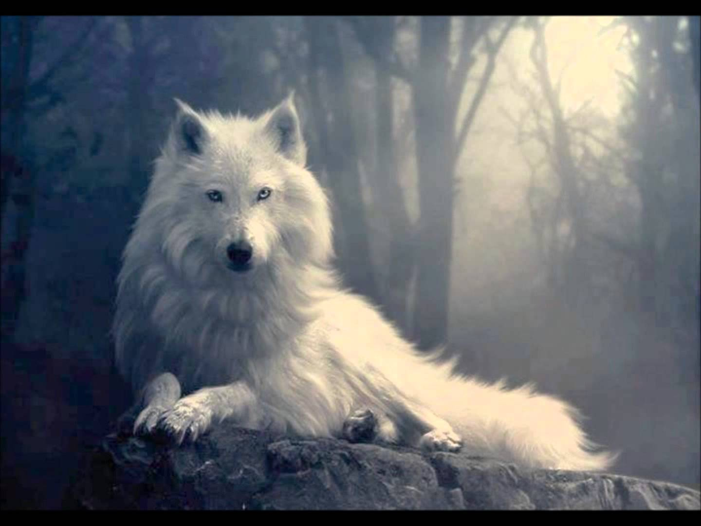 Lobo mau e animal animais cultura mix for Foto beautiful