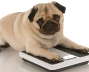 update-home-remedies-overweight-dogs-1