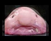 Peixe Gota (6)