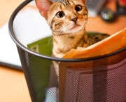 Young Bengal Cat plying in Recycle Bin :)