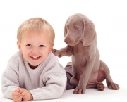 Boy and Weimaraner pup
