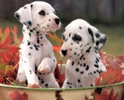 cute-puppies-pic3