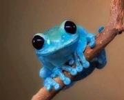 Sapo Azul (3)