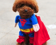 Superman Canino (1)