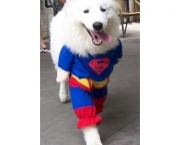 Superman Canino (2)