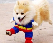 Superman Canino (3)