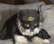 Superman e Batman Caninos (1)