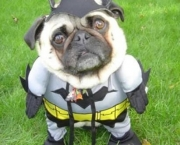 Superman e Batman Caninos (2)