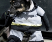 Superman e Batman Caninos (3)