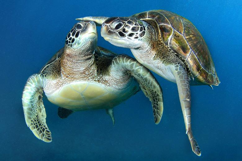 Resultado de imagem para imagens de tartarugas marinhas
