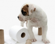 how-to-potty-train-your-dog