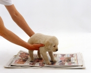Putting a Golden Retriever puppy on newspaper, house training