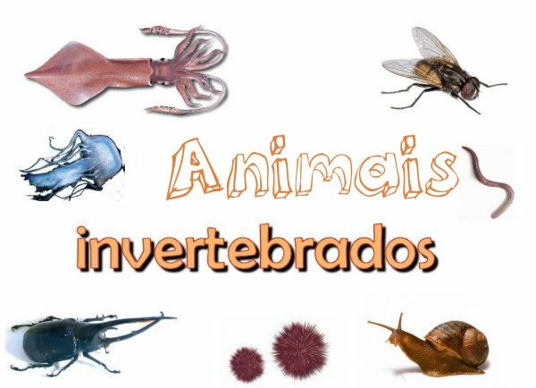 Fotos de Animais Invertebrados