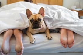 Dog-laying-under-covers-with-couple